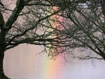 web-rainbowtrees