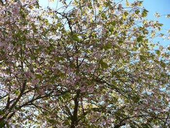 web-blossom