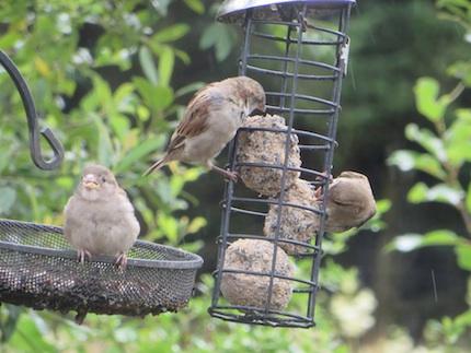 2013 Sparrowbabyfeed