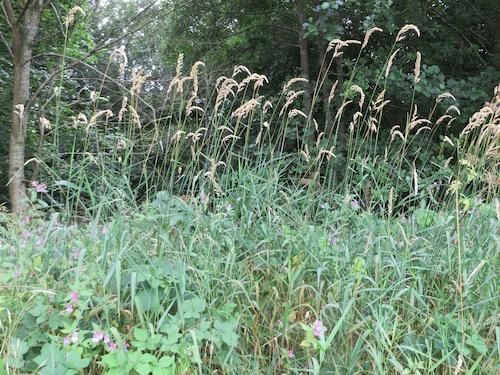 2013 Summergrasses