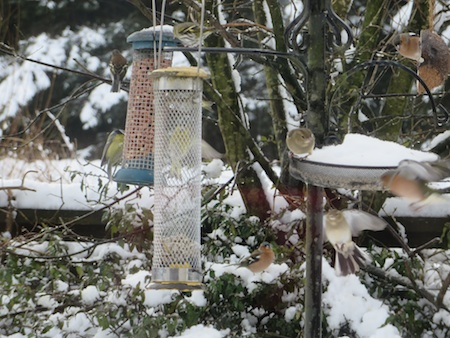 B2015 Snowbirds