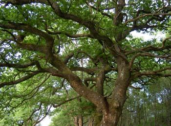 Web Oaktree.jpg