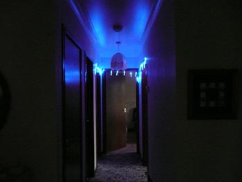 web-bluelights