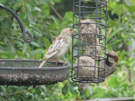 2013 Sparrowfeeder