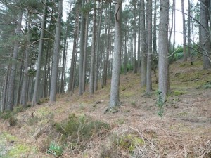 2012 Talltrees