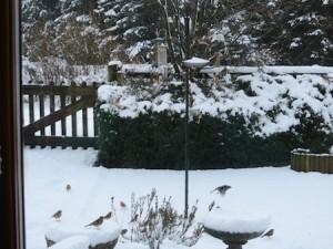 B2015 Snowmarchgate