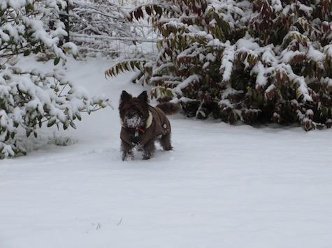 B2016 Snowmistydog